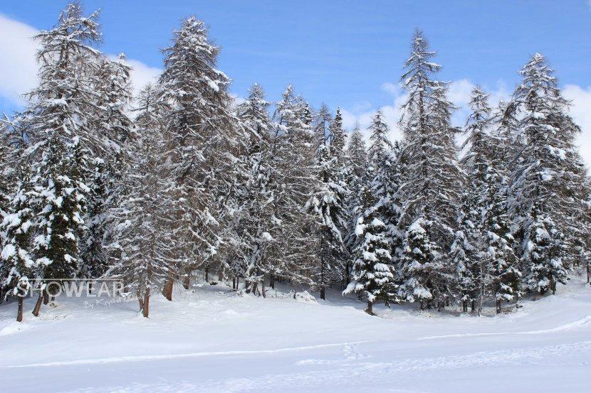 IMG_2055-snowkemplowlogo